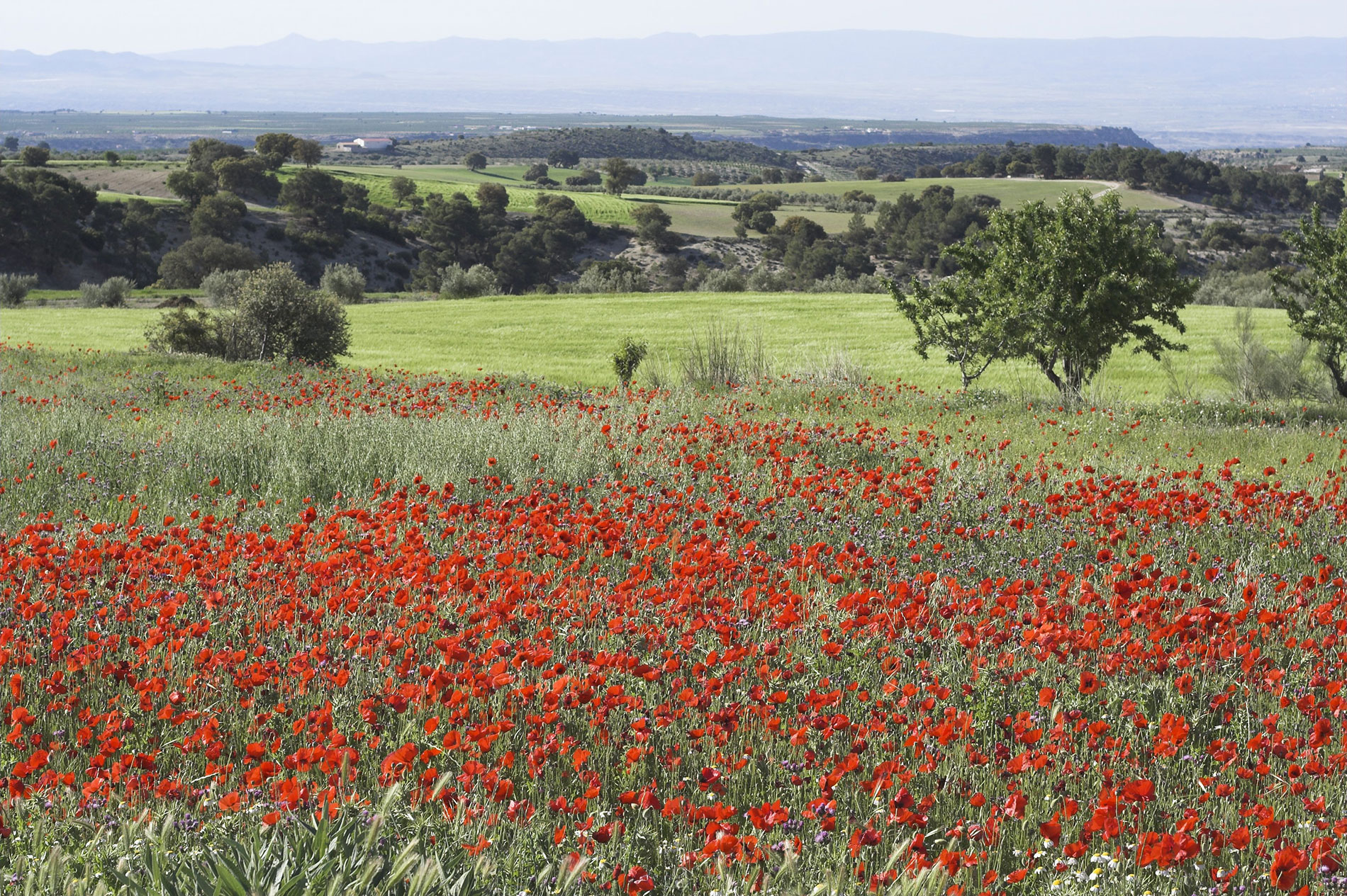 campo cebas,campocebas,Altiplano andalusia,altiplano andalucia,family activity holiday andalusia spain, Responsible travel